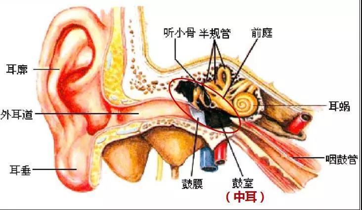 游泳时怎么预防有效预防中耳炎
